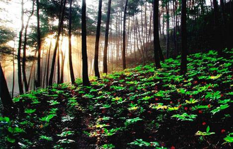 Le ginseng sur internet informations achat comment for Achat de plantes sur internet