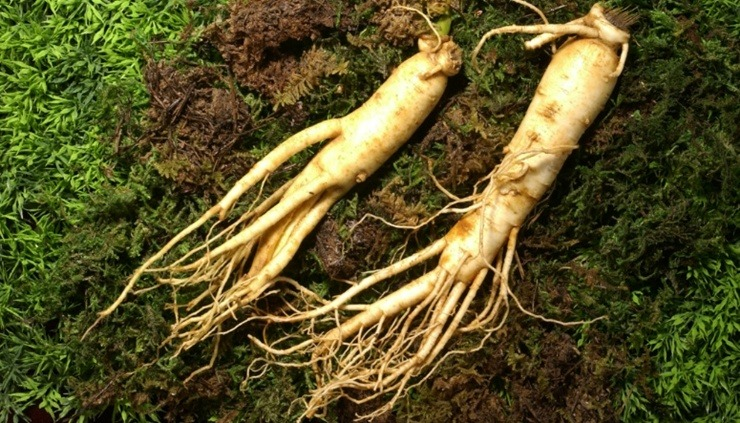 Ce sont des racines de ginseng blanc Corée